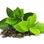 Grün Tee Anwendung Wirkung Pflanze