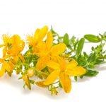Johanniskraut Anwendung Verwendung Wirkung Pflanze