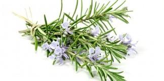 Rosmarin Anwendung Verwendung Wirkung Pflanze
