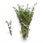 Thymian Pflanze Wirkung Anwendung Verwendung